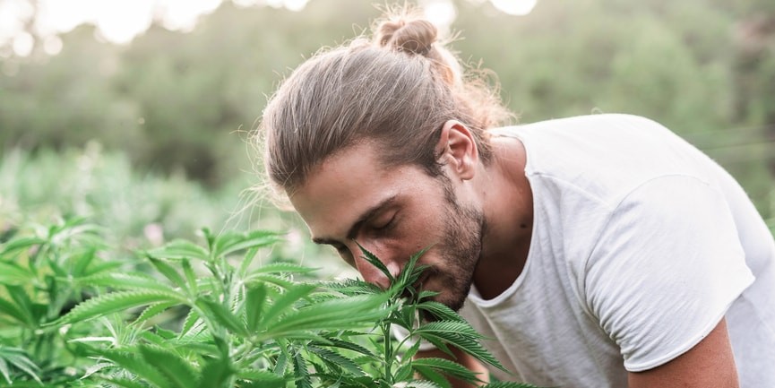 Man Smelling Hemp Plants