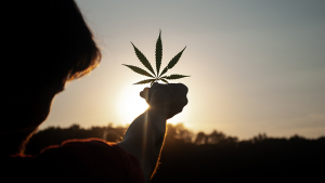 If you were surprised to learn that hemp oil and hemp seed oil are different, you might be enlightened that CBD oil and Hemp Oil are also different things, though closer related