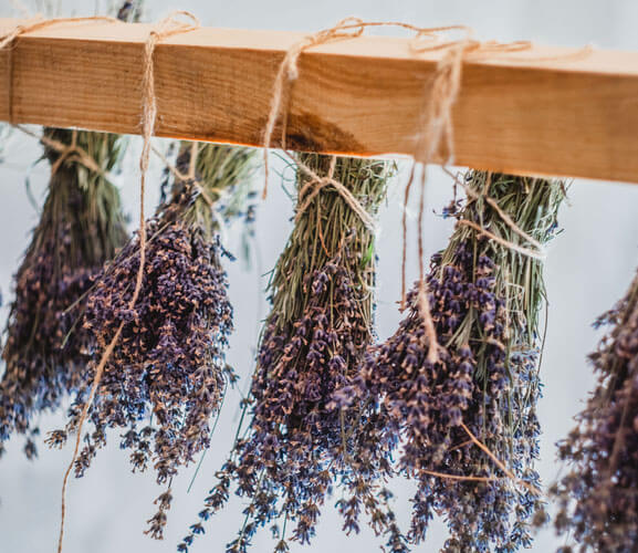 Lavender Bunches On Drying Rack