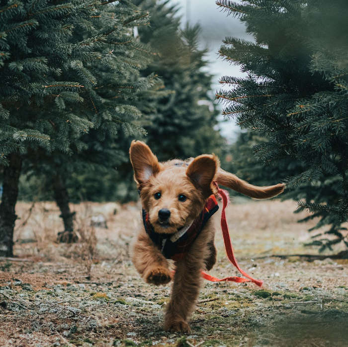 Yes, pets can take CBD, and there products for it all over the web. Synchronicity Hemp Oil sells human grade CBD oils for human consumption, but with all natural ingredients.