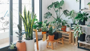 Healthy Houseplants