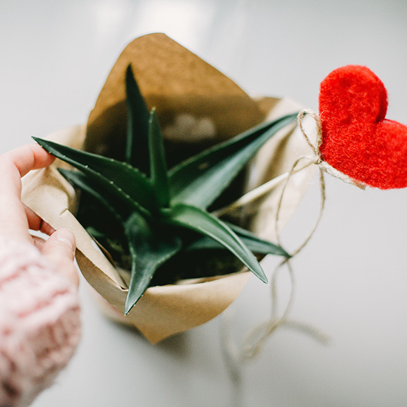 Plants make for great gifts to a lot of people. What about CBD as a gift. Maybe a CBD giftbox? Synchronicity's CBD Trial kit makes for a great CBD gift.