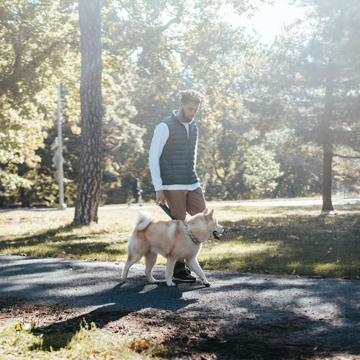Going on a jog, hike or run with your animal can be a wonderful way to destress. There are other tools for destressing however, such as taking a cbd pill with full spectrum hemp oil. Synchronicity Hemp Oil is a top supplier of cbd oil products