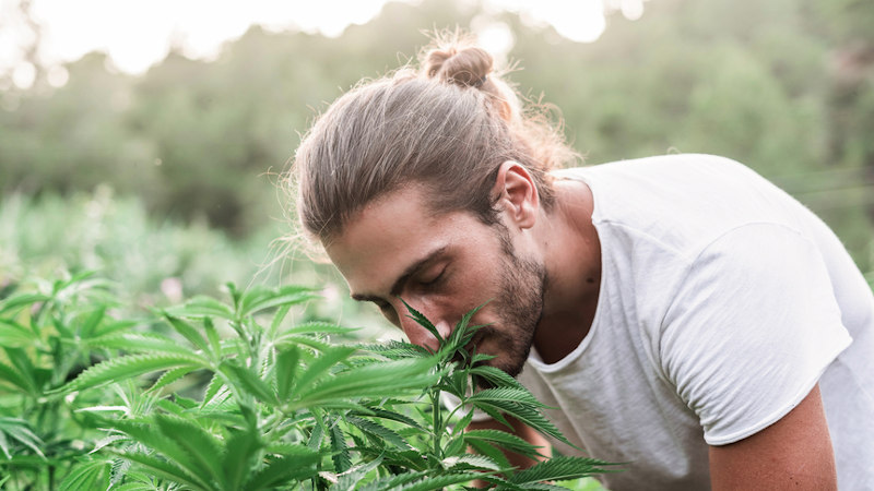 Man smelling hemp plants. Do Hemp Plants Smell? Do hemp plants smell different from cannabis plants? What's the difference between hemp and cannabis?