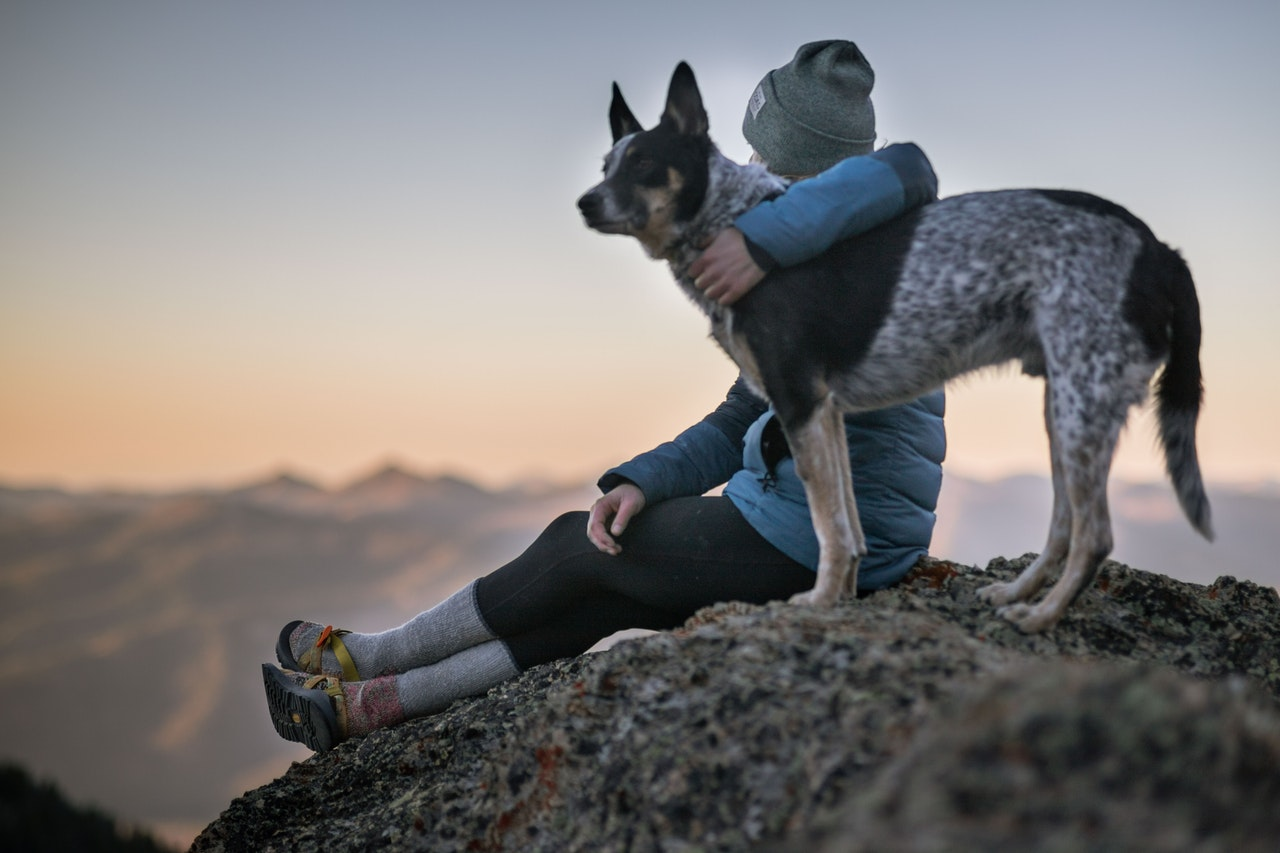 photo-of-person-holding-black-and-white-dog