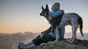 Trials of CBD for Dogs went well, so they're sold in the public. Can CBD help pets? I think so.
