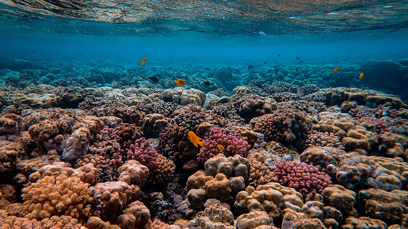 Coral Reefs are among the most endangered by a sunscreen that is made with harmful chemicals.