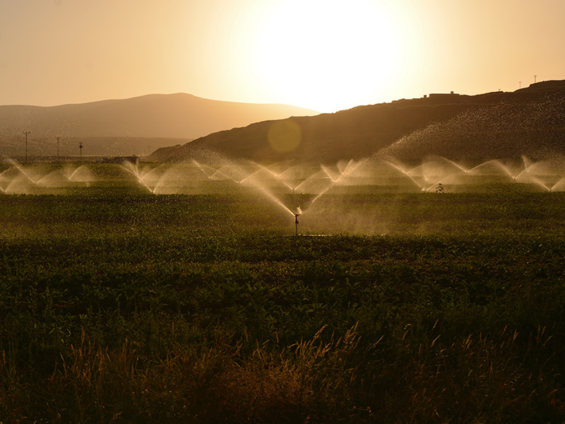 States that get lots of sunshine each year can tend to also be dry states, and therefor, supplementing your growth with irrigation is necessary in many places.